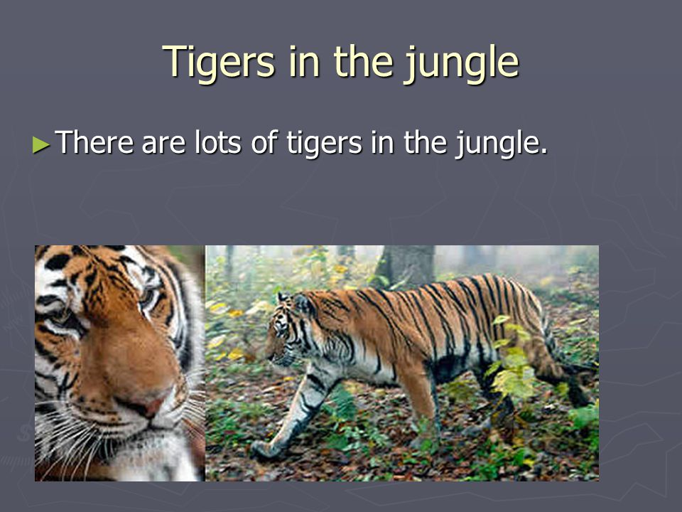 Tigers in the jungle ► There are lots of tigers in the jungle.