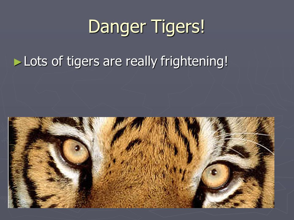 Danger Tigers! ► Lots of tigers are really frightening!