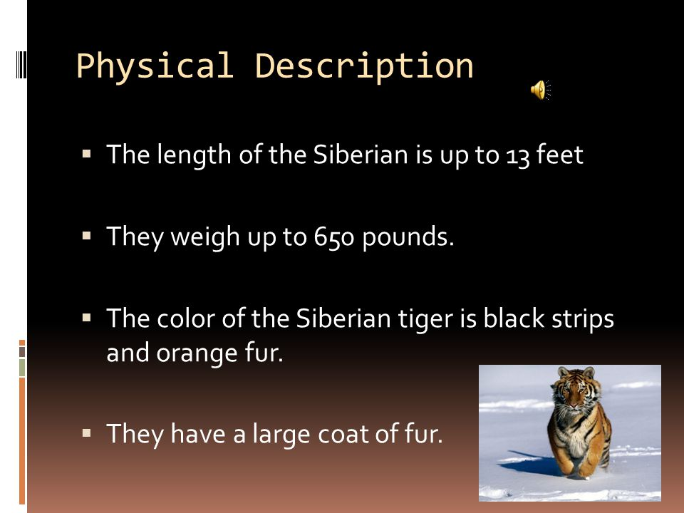 Habitat  The Siberian tiger lives in northeastern China Korea, and eastern Siberia.