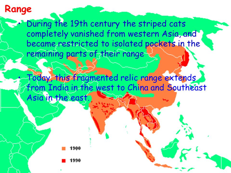 Range During the 19th century the striped cats completely vanished from western Asia, and became restricted to isolated pockets in the remaining parts of their range Today, this fragmented relic range extends from India in the west to China and Southeast Asia in the east.