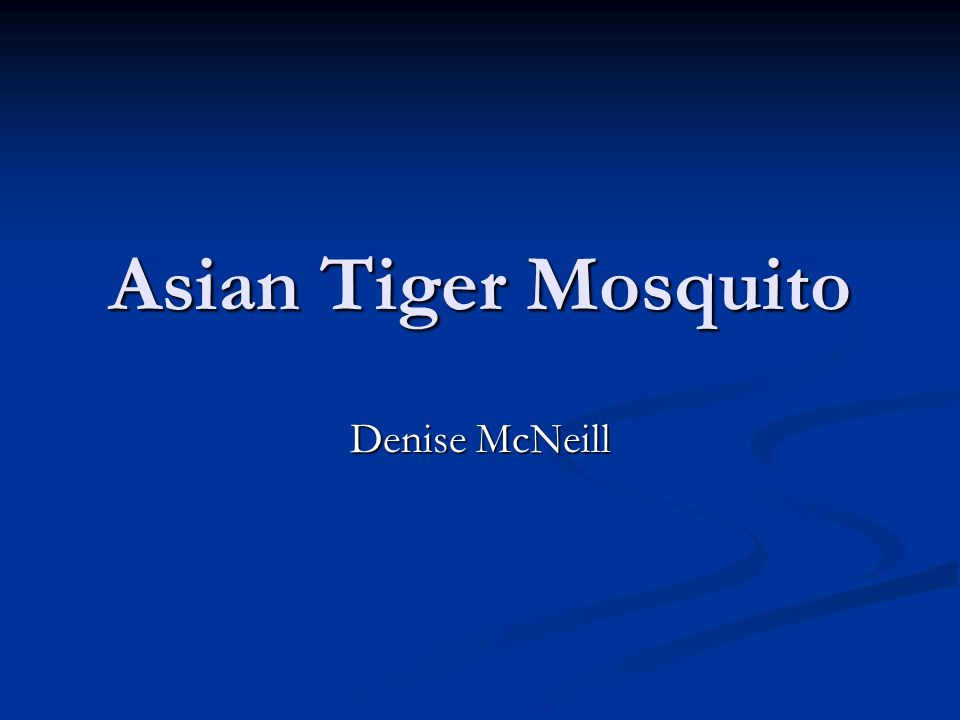Asian Tiger Mosquito Denise McNeill