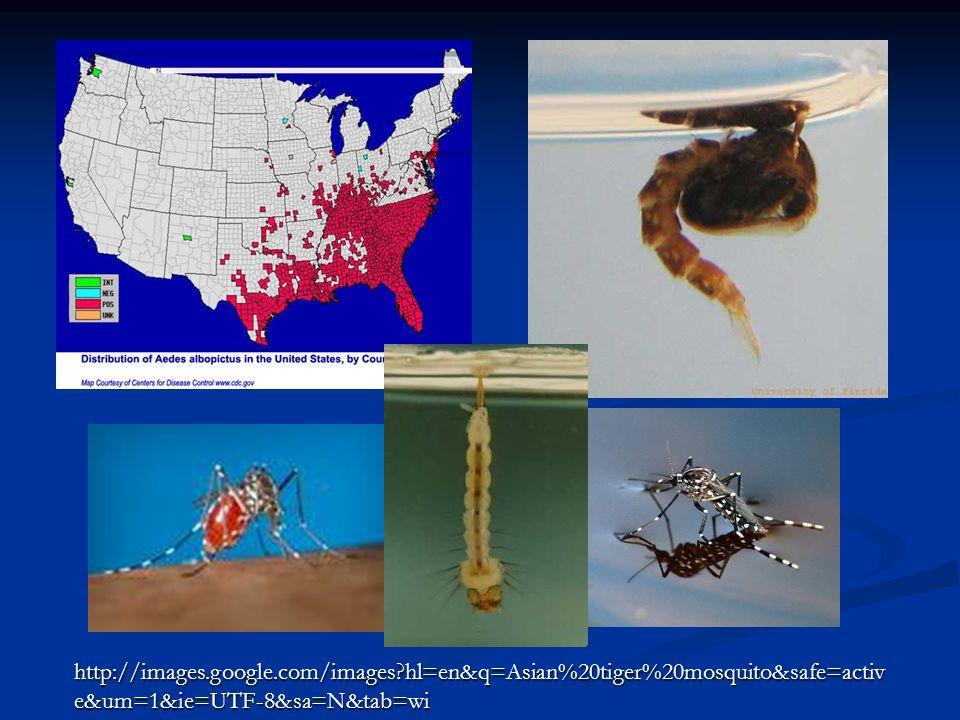 http://images.google.com/images hl=en&q=Asian%20tiger%20mosquito&safe=activ e&um=1&ie=UTF-8&sa=N&tab=wi