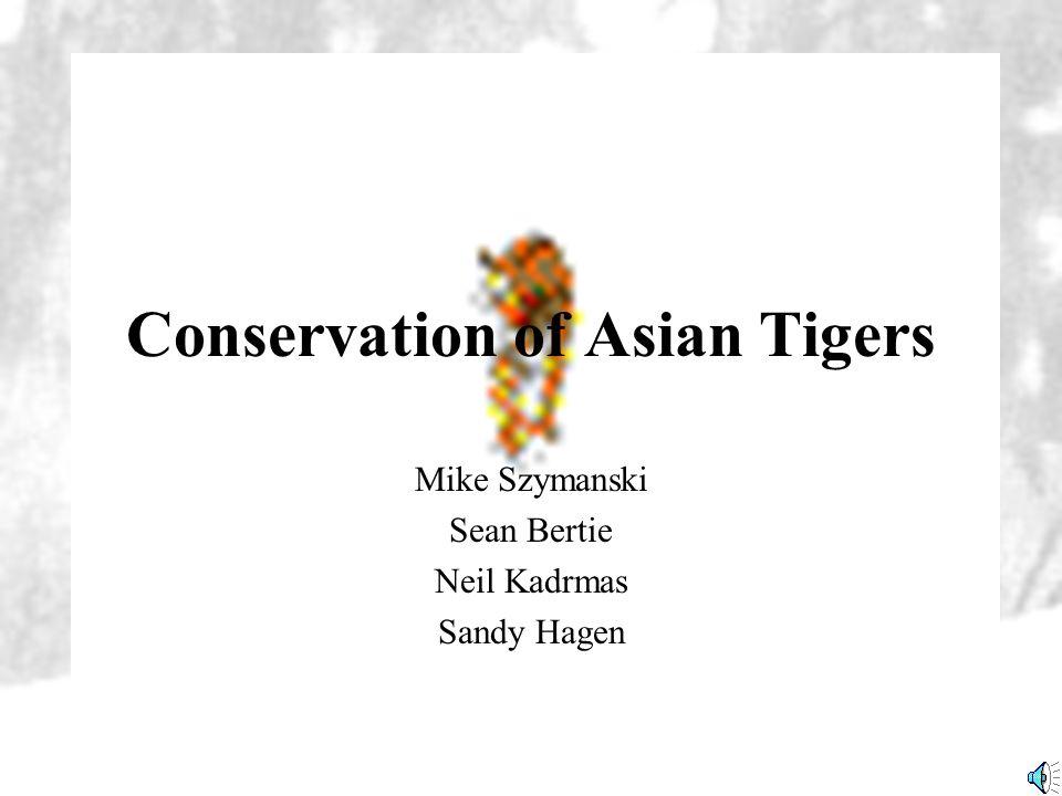 Conservation of Asian Tigers Mike Szymanski Sean Bertie Neil Kadrmas Sandy Hagen