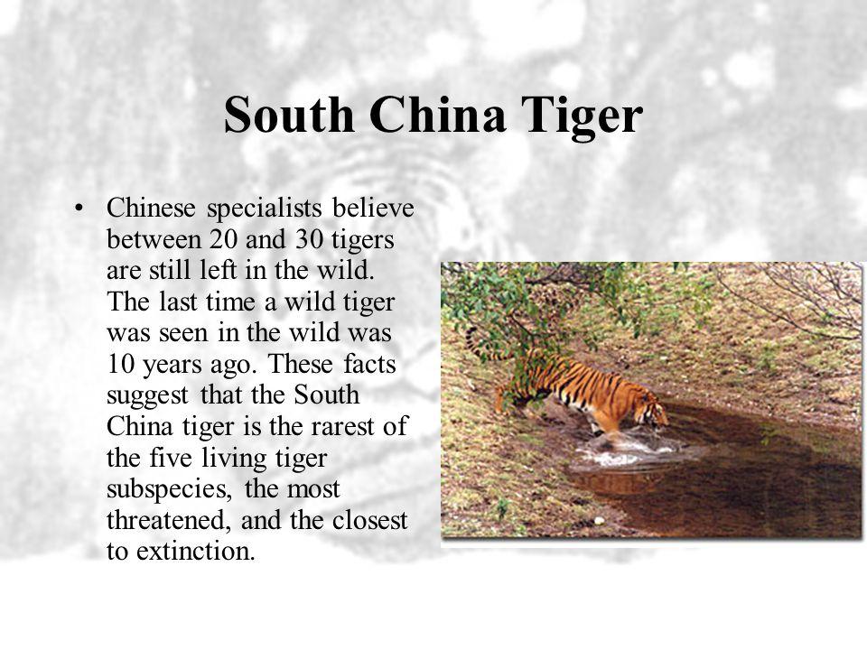 South China Distribution