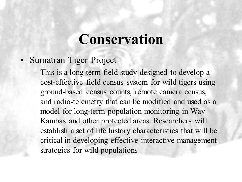 Deforestation and Poaching Deforestation is depriving tigers of needed habitat leading to subpopulations Poaching is accelerating leading from defores