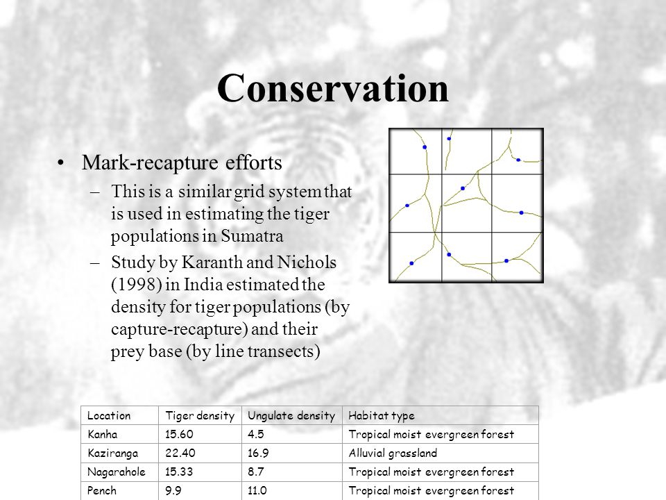 Conservation Sumatran Tiger Project cont. –The project is also looking to educate the people and allocate forest resources in tiger habitat –This proj