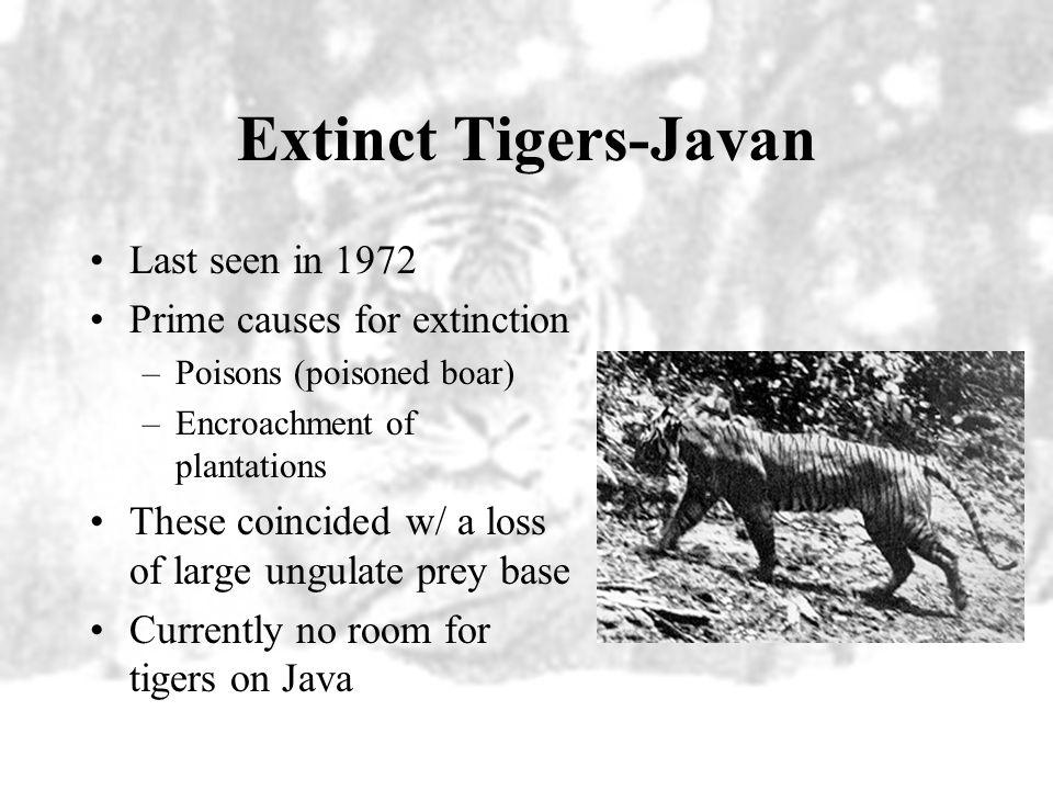 Extinct Tigers Javan (Panthera tigris sondaica) Bali (Panthera tigris balica) Caspian (Panthera tigris virgata)