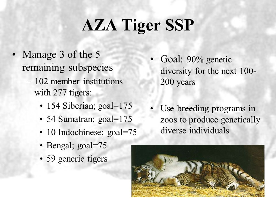 Captive Management Species Survival Plans (SSP) –Objective: Preservation of wildlife both as species and as components of ecosystems –Cooperative mana