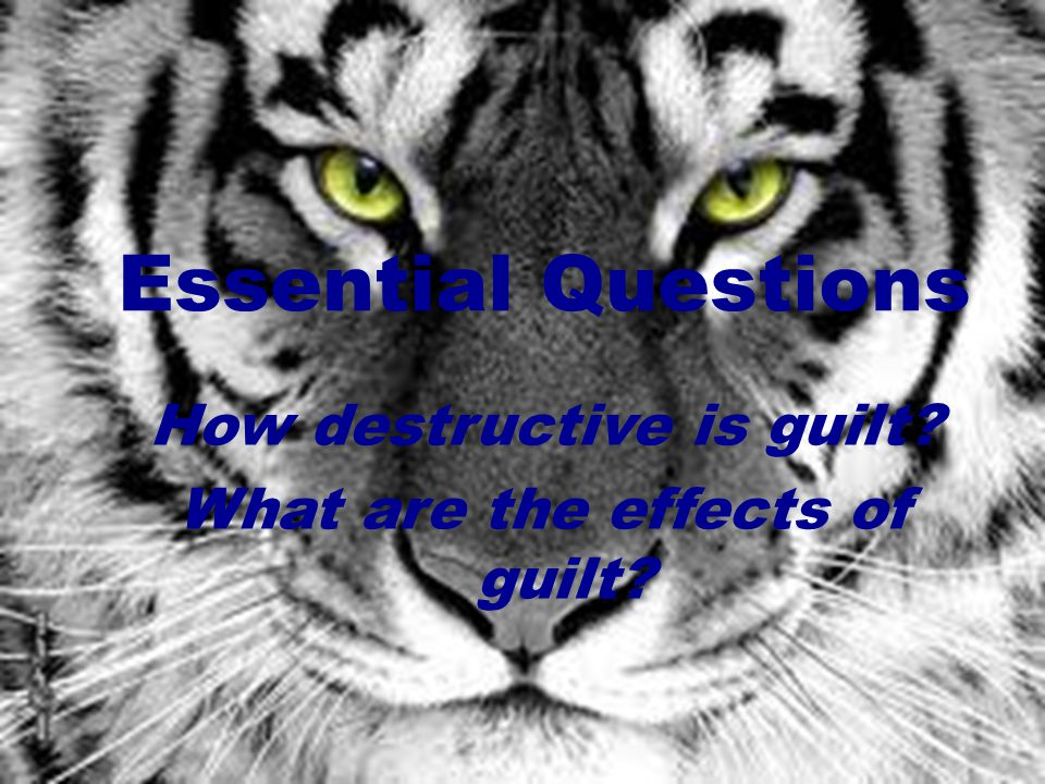 Essential Questions How destructive is guilt? What are the effects of guilt?
