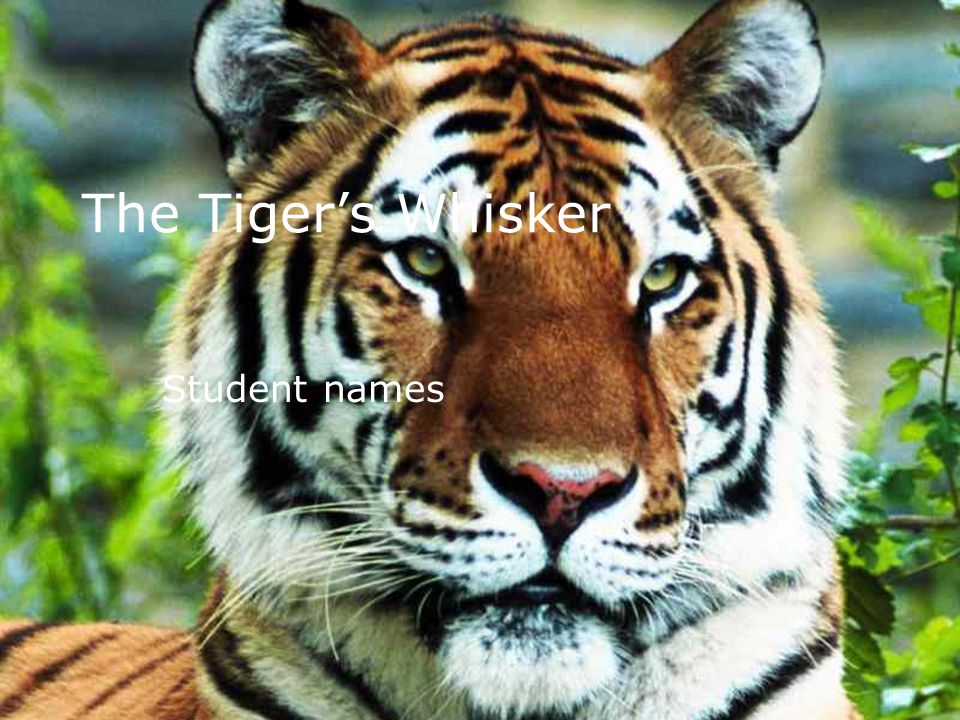 The Tiger's Whisker Student names