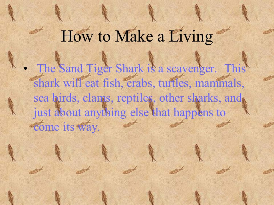 Habitat The Sand Tiger Shark lives along the coasts of the western Atlantic Ocean from the Gulf of Maine to Argentina.