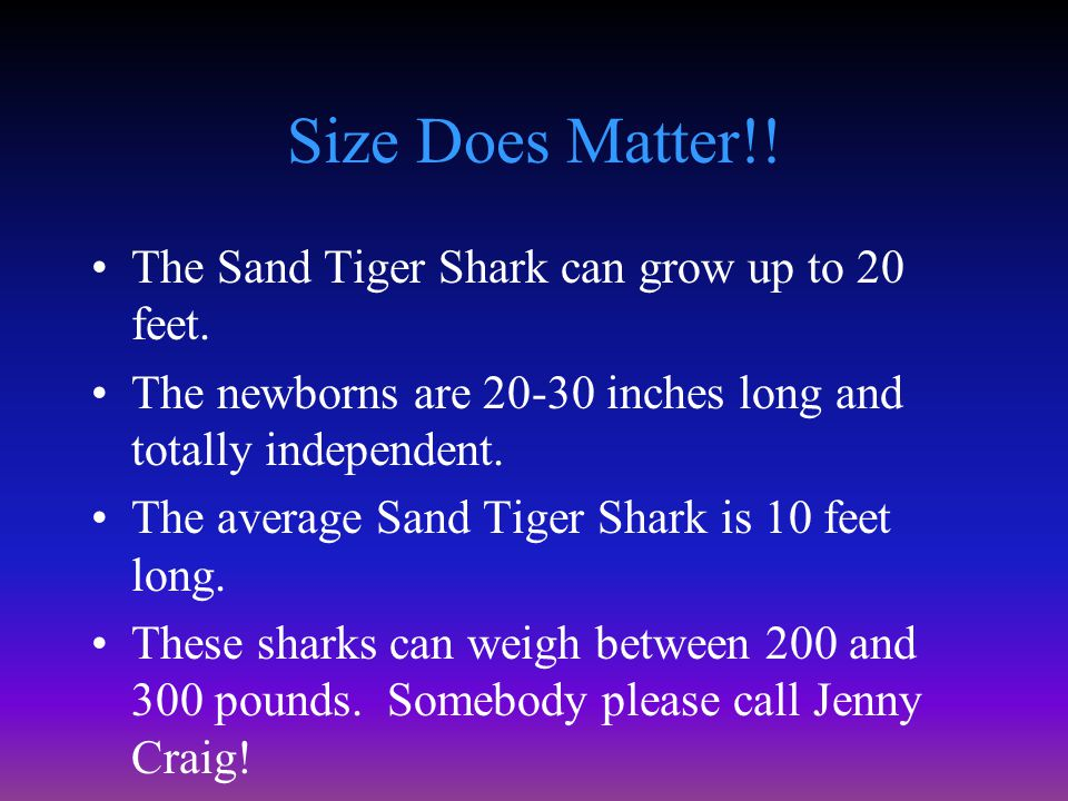 How to Make a Living The Sand Tiger Shark is a scavenger.