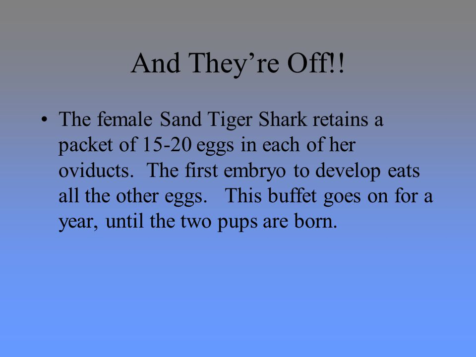 Life span The life span of the Sand Tiger Shark is unknown.