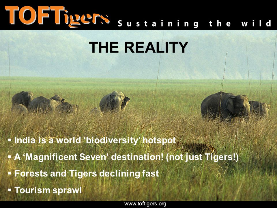 www.toftigers.org Your purchasing decisions are crucial for your long term future And critical that only 'Good' Tourism survives Because it can save Tigers and forests