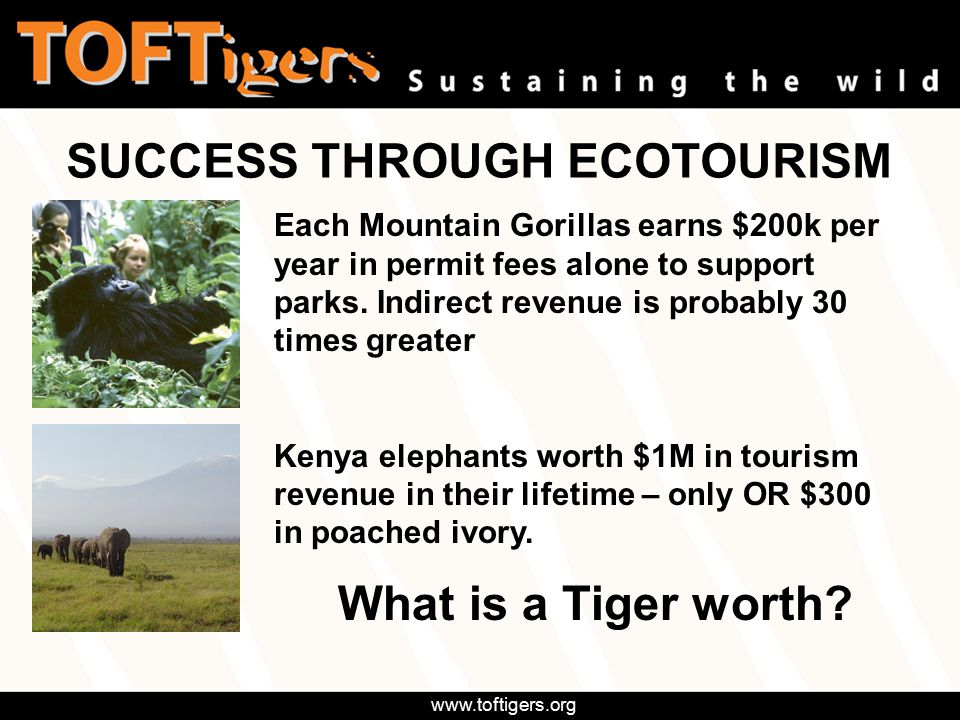 www.toftigers.org and 45 others from India India & overseas SOME OF OUR MEMBERS