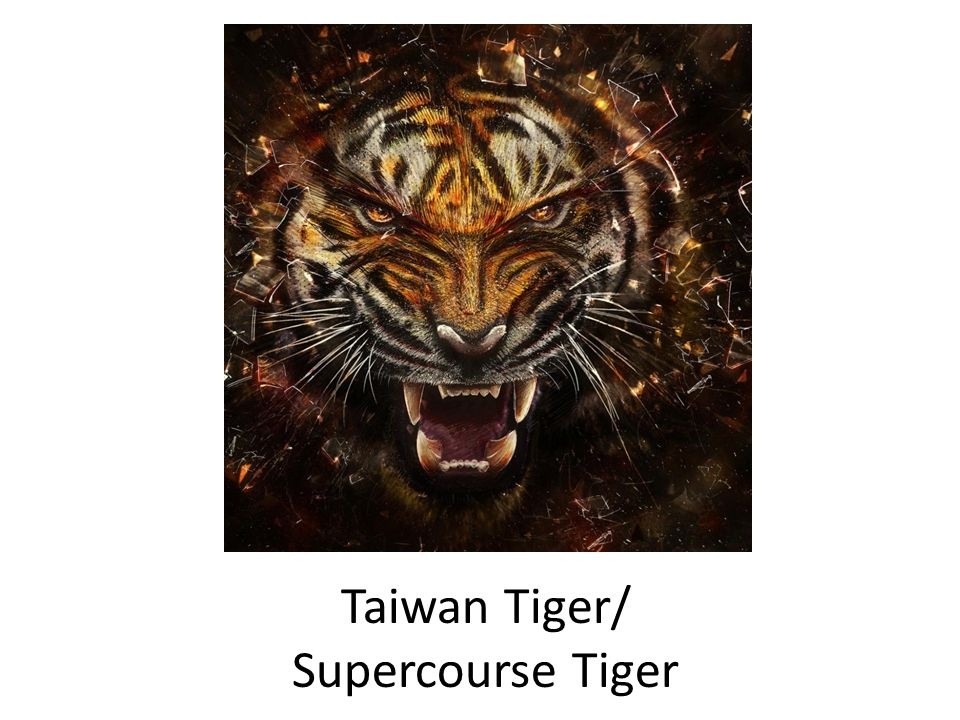 Taiwan Tiger/ Supercourse Tiger