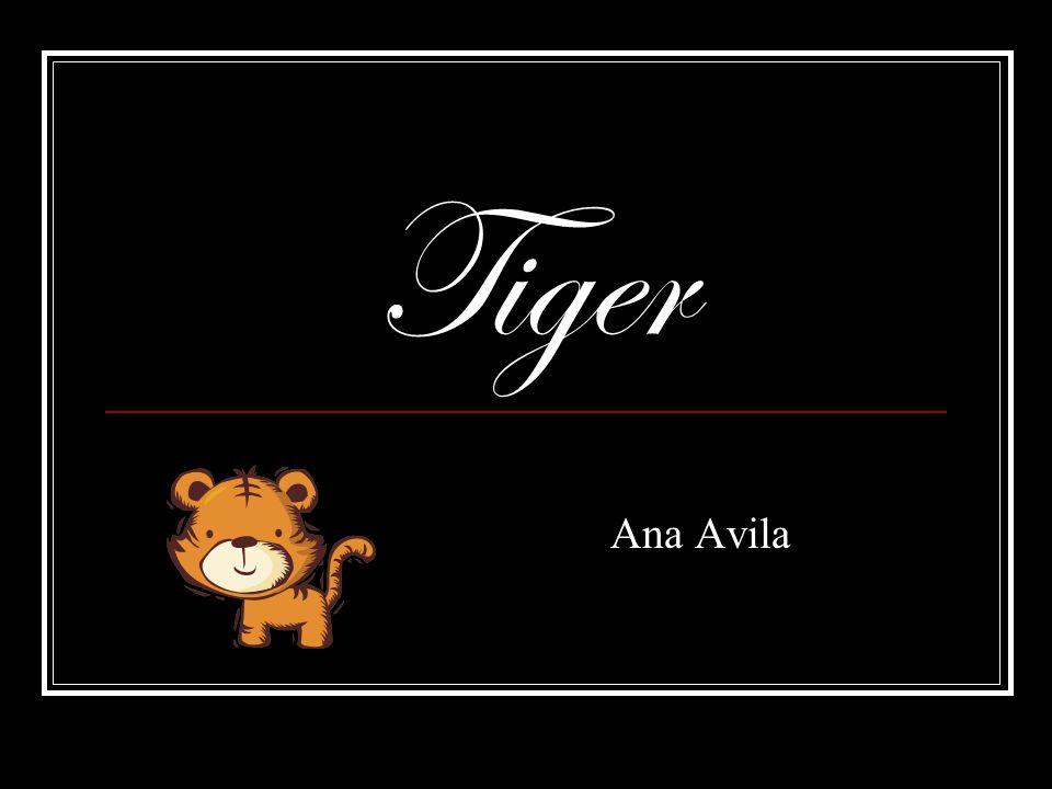 Tiger Ana Avila