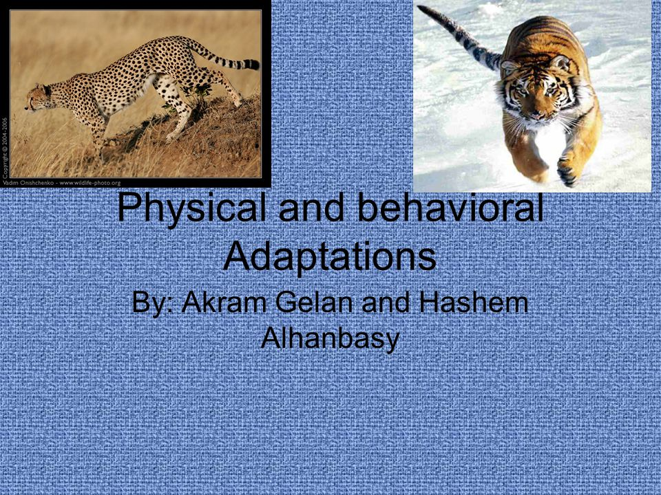 Physical and behavioral Adaptations By: Akram Gelan and Hashem Alhanbasy