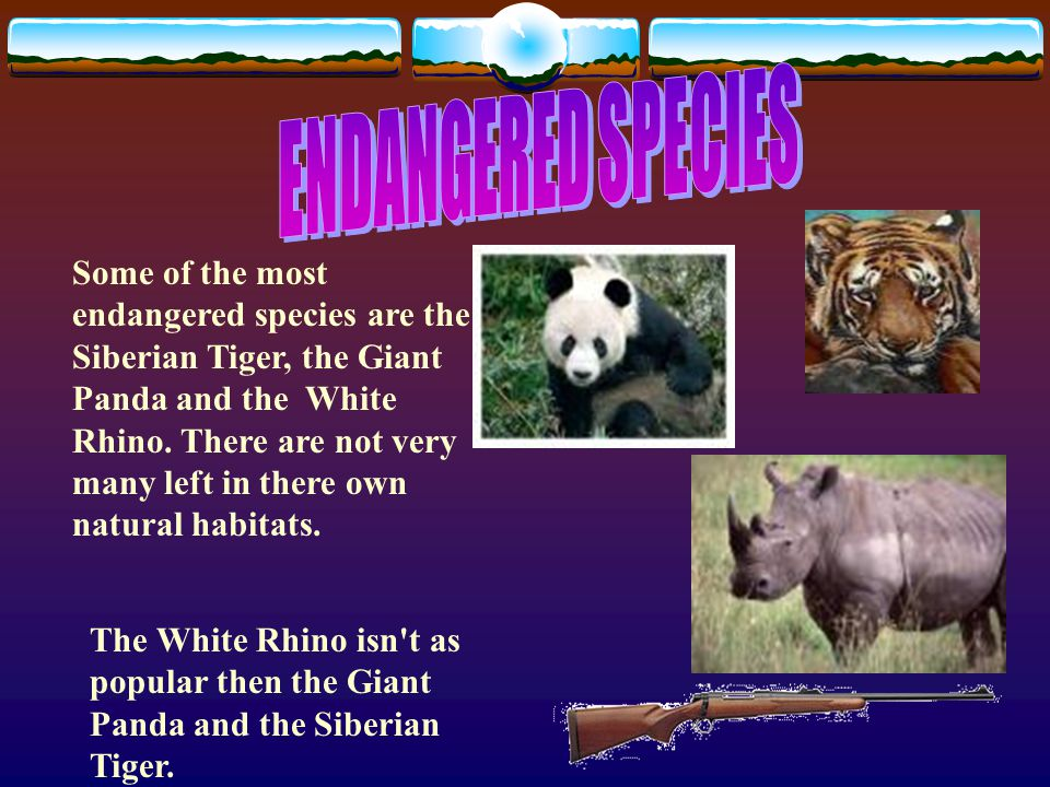 Some of the most poached animals around the world the cheetah the giant panda and the elephant