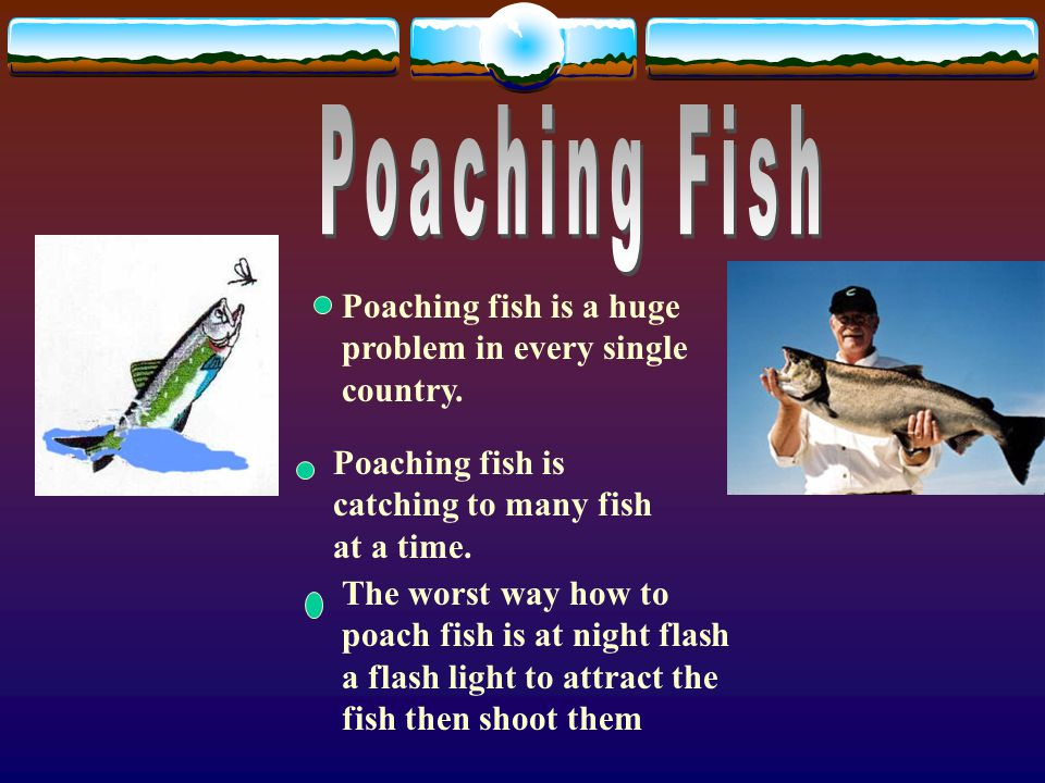 Poaching fish is a huge problem in every single country.