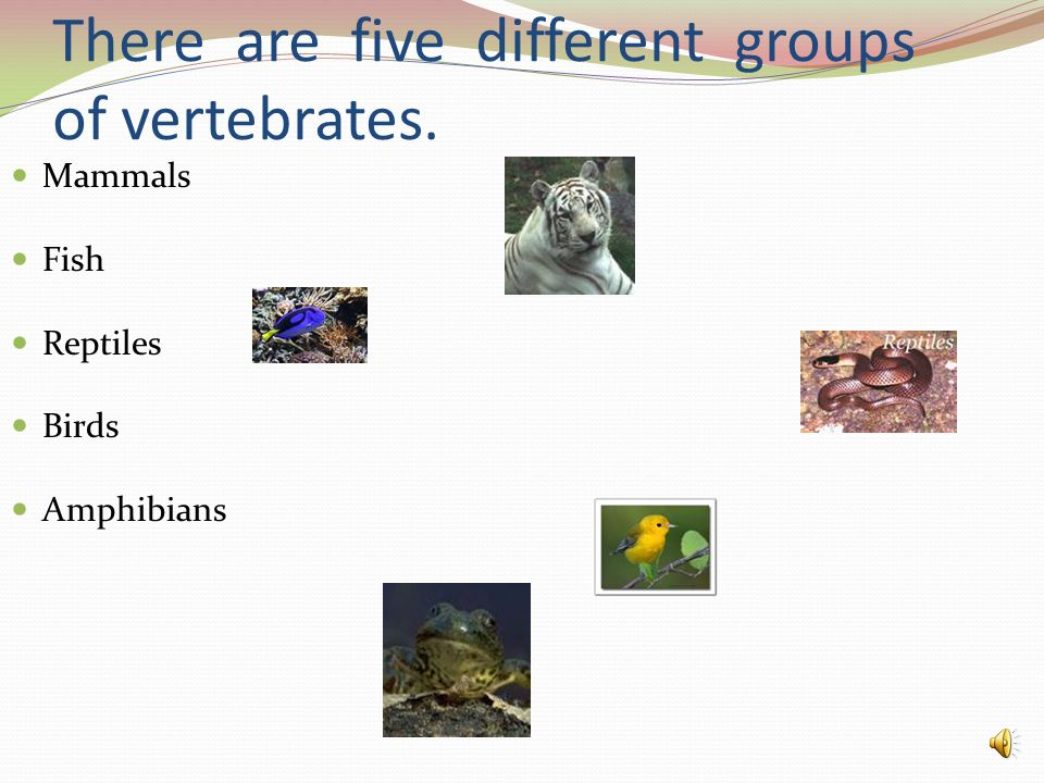 There are five different groups of vertebrates. Mammals Fish Reptiles Birds Amphibians