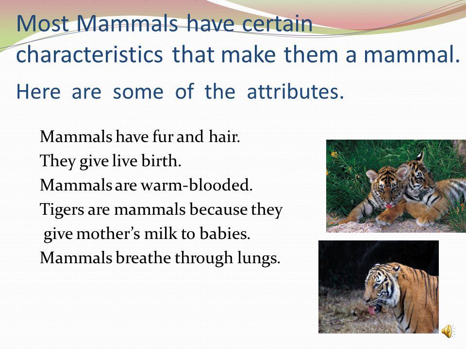 Most Mammals have certain characteristics that make them a mammal.