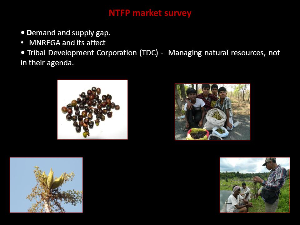 NTFP market survey Demand and supply gap.