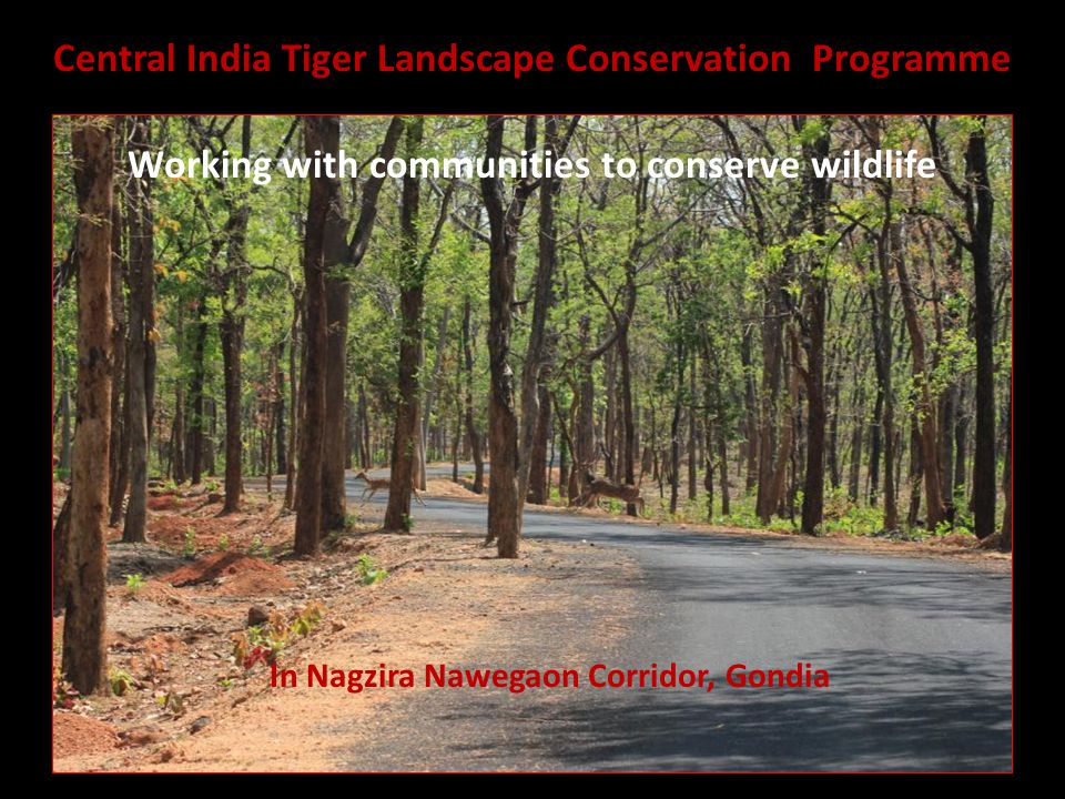 In Nagzira Nawegaon Corridor, Gondia Central India Tiger Landscape Conservation Programme Working with communities to conserve wildlife