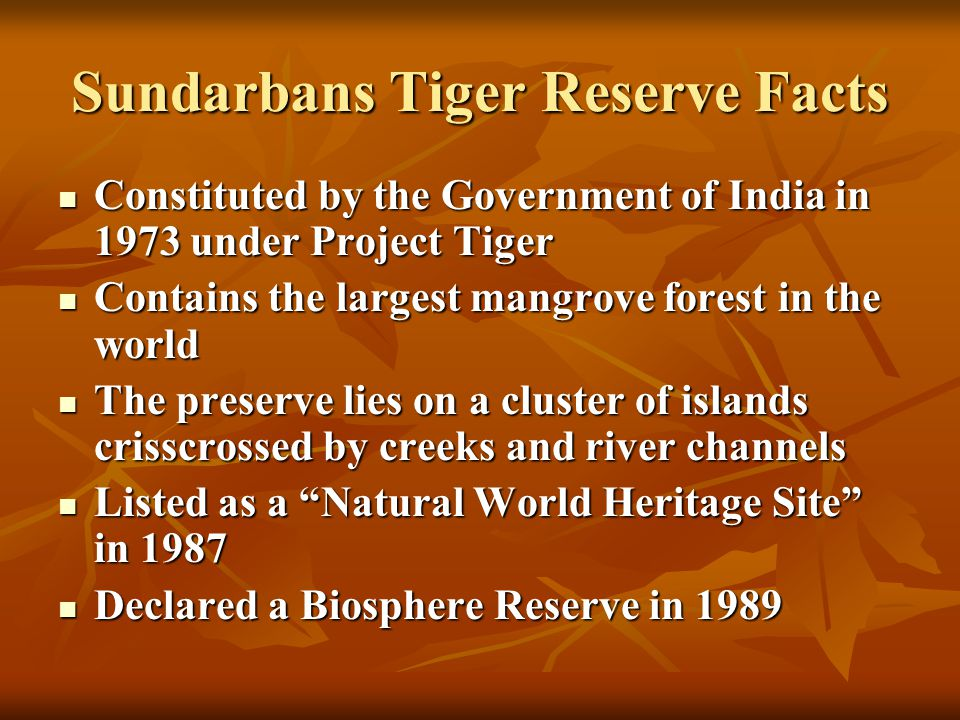 Sundarbans Tiger Reserve Facts Constituted by the Government of India in 1973 under Project Tiger Constituted by the Government of India in 1973 under Project Tiger Contains the largest mangrove forest in the world Contains the largest mangrove forest in the world The preserve lies on a cluster of islands crisscrossed by creeks and river channels The preserve lies on a cluster of islands crisscrossed by creeks and river channels Listed as a Natural World Heritage Site in 1987 Listed as a Natural World Heritage Site in 1987 Declared a Biosphere Reserve in 1989 Declared a Biosphere Reserve in 1989