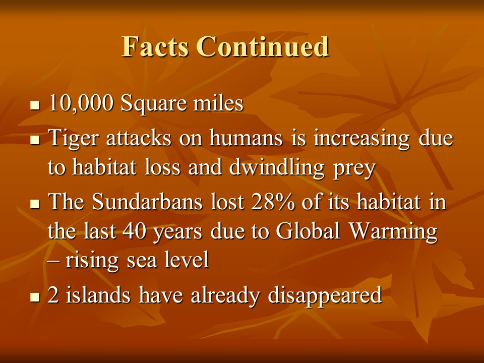 Facts Continued 10,000 Square miles 10,000 Square miles Tiger attacks on humans is increasing due to habitat loss and dwindling prey Tiger attacks on humans is increasing due to habitat loss and dwindling prey The Sundarbans lost 28% of its habitat in the last 40 years due to Global Warming – rising sea level The Sundarbans lost 28% of its habitat in the last 40 years due to Global Warming – rising sea level 2 islands have already disappeared 2 islands have already disappeared