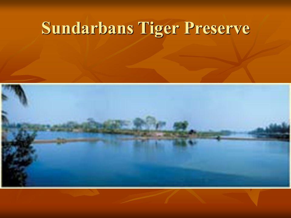 Sundarbans Tiger Preserve