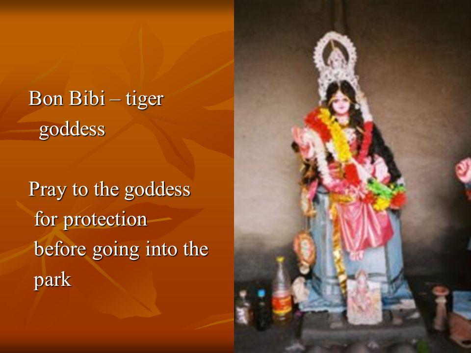 Bon Bibi – tiger goddess goddess Pray to the goddess for protection for protection before going into the before going into the park park