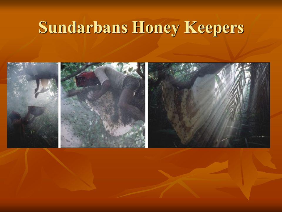 Sundarbans Honey Keepers
