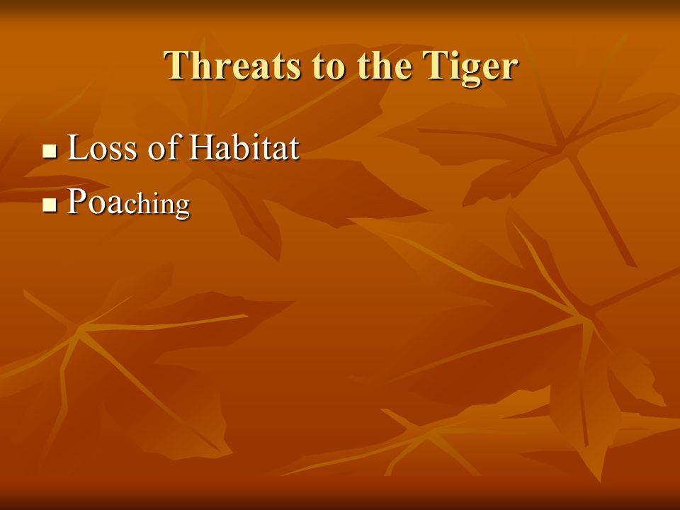 Threats to the Tiger Loss of Habitat Loss of Habitat Poa ching Poa ching