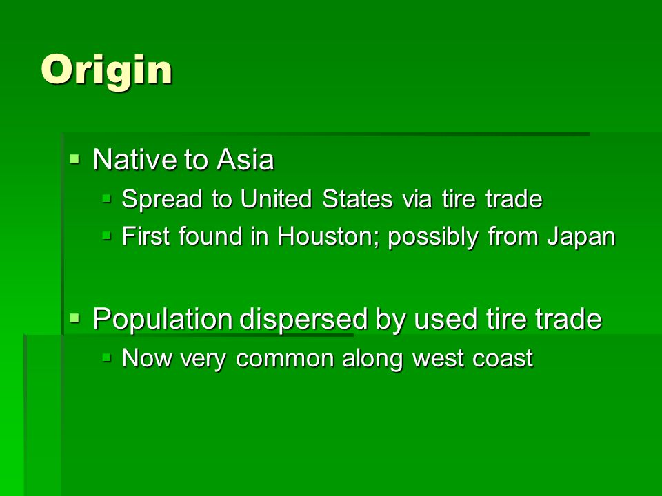 Origin  Native to Asia  Spread to United States via tire trade  First found in Houston; possibly from Japan  Population dispersed by used tire tra