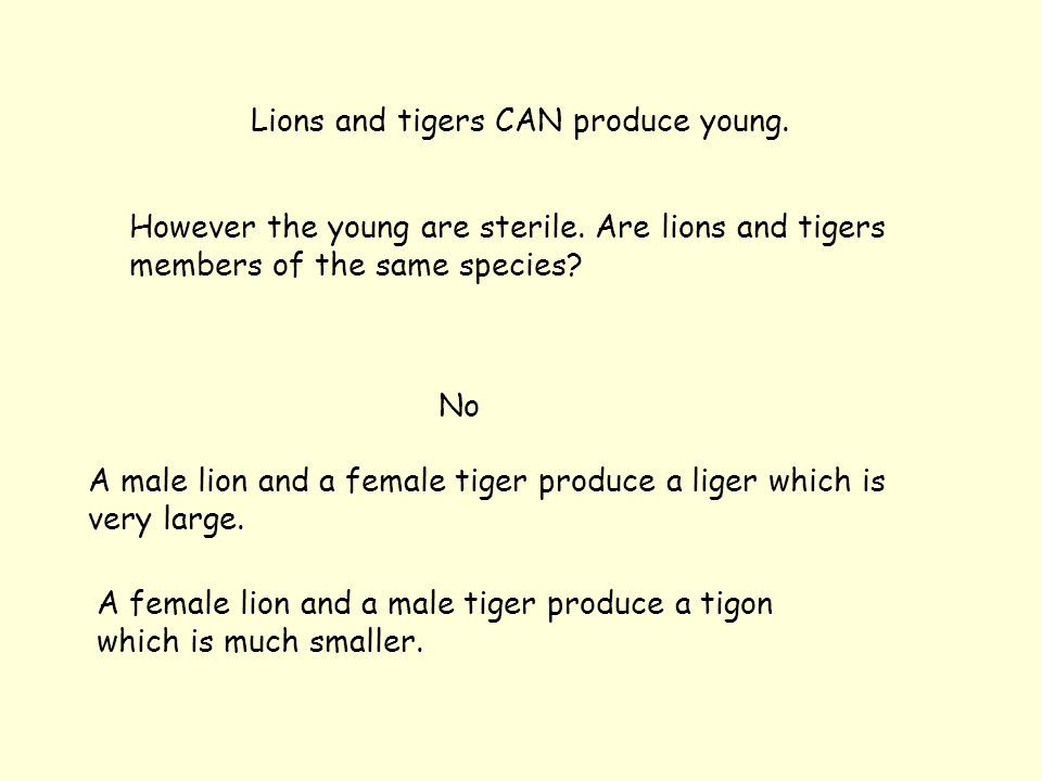 Lions and tigers CAN produce young. However the young are sterile.
