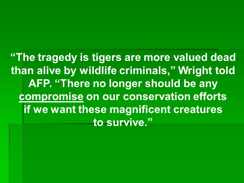 The tragedy is tigers are more valued dead than alive by wildlife criminals, Wright told AFP.