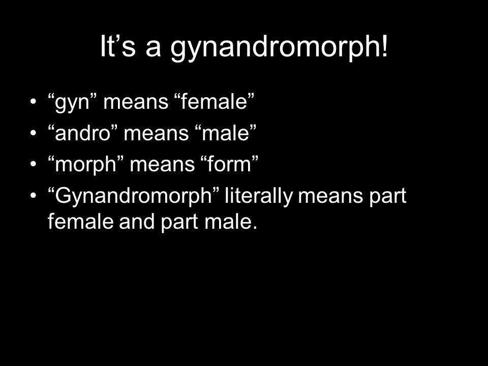 It's a gynandromorph.