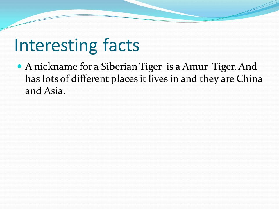 Interesting facts A nickname for a Siberian Tiger is a Amur Tiger.