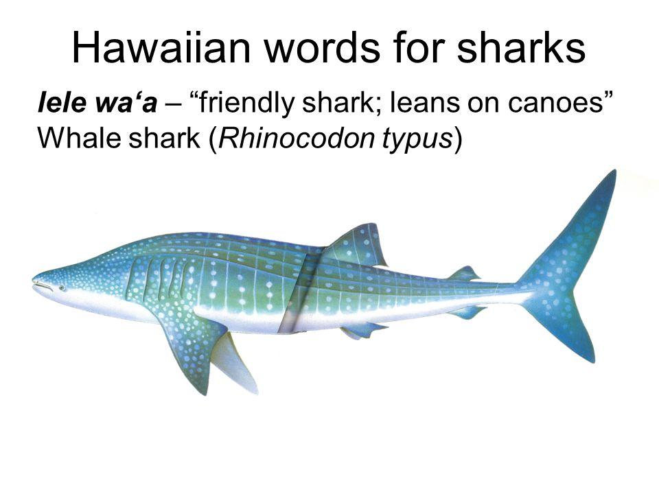 Hawaiian words for sharks lele wa'a – friendly shark; leans on canoes Whale shark (Rhinocodon typus)