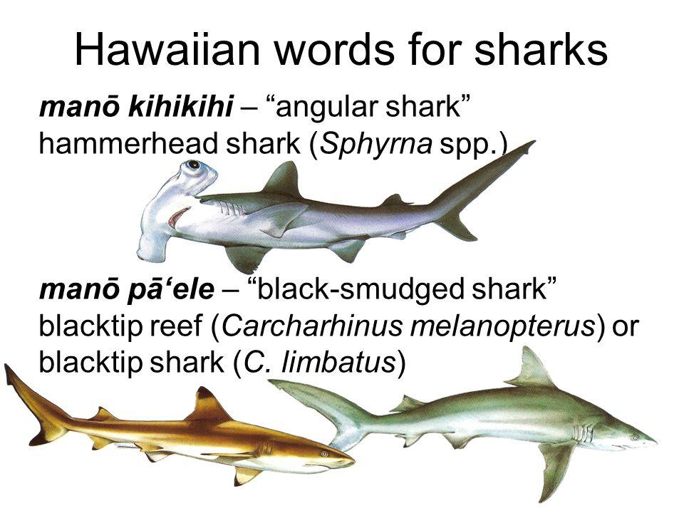 Hawaiian words for sharks manō kihikihi – angular shark hammerhead shark (Sphyrna spp.) manō pā'ele – black-smudged shark blacktip reef (Carcharhinus melanopterus) or blacktip shark (C.