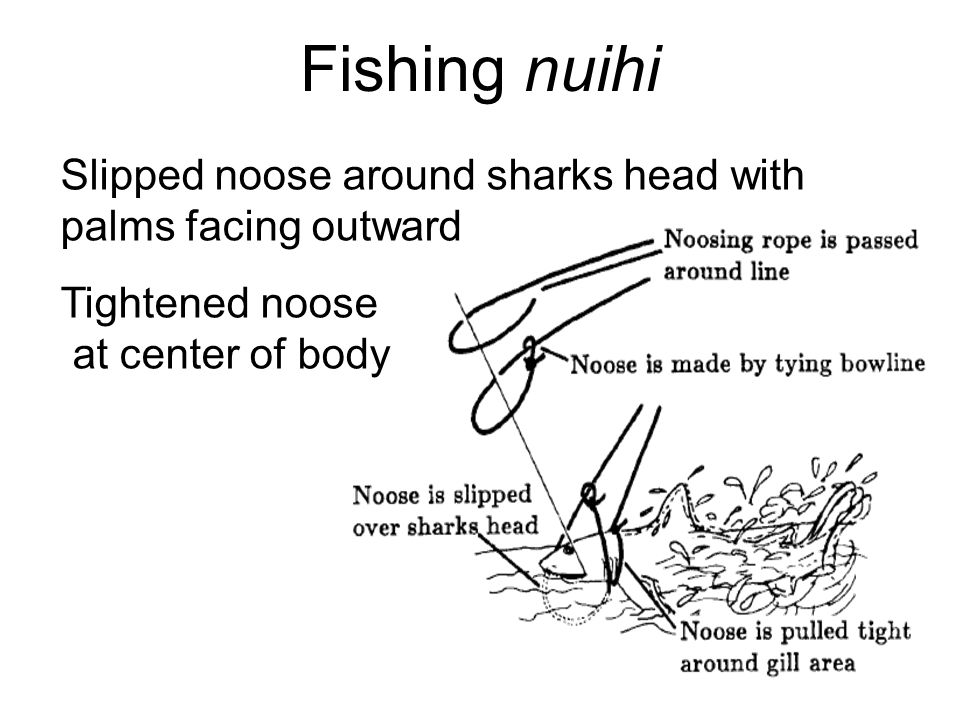 Fishing nuihi Slipped noose around sharks head with palms facing outward Tightened noose at center of body