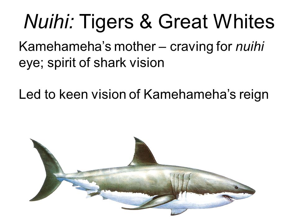 Nuihi: Tigers & Great Whites Kamehameha's mother – craving for nuihi eye; spirit of shark vision Led to keen vision of Kamehameha's reign