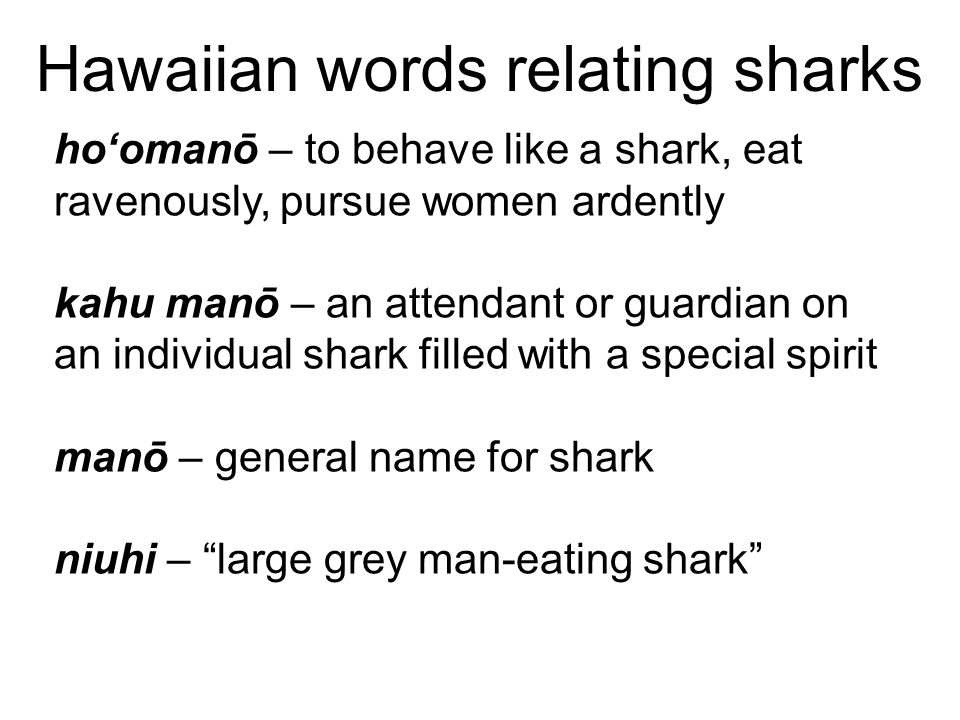 Hawaiian words relating sharks ho'omanō – to behave like a shark, eat ravenously, pursue women ardently kahu manō – an attendant or guardian on an individual shark filled with a special spirit manō – general name for shark niuhi – large grey man-eating shark