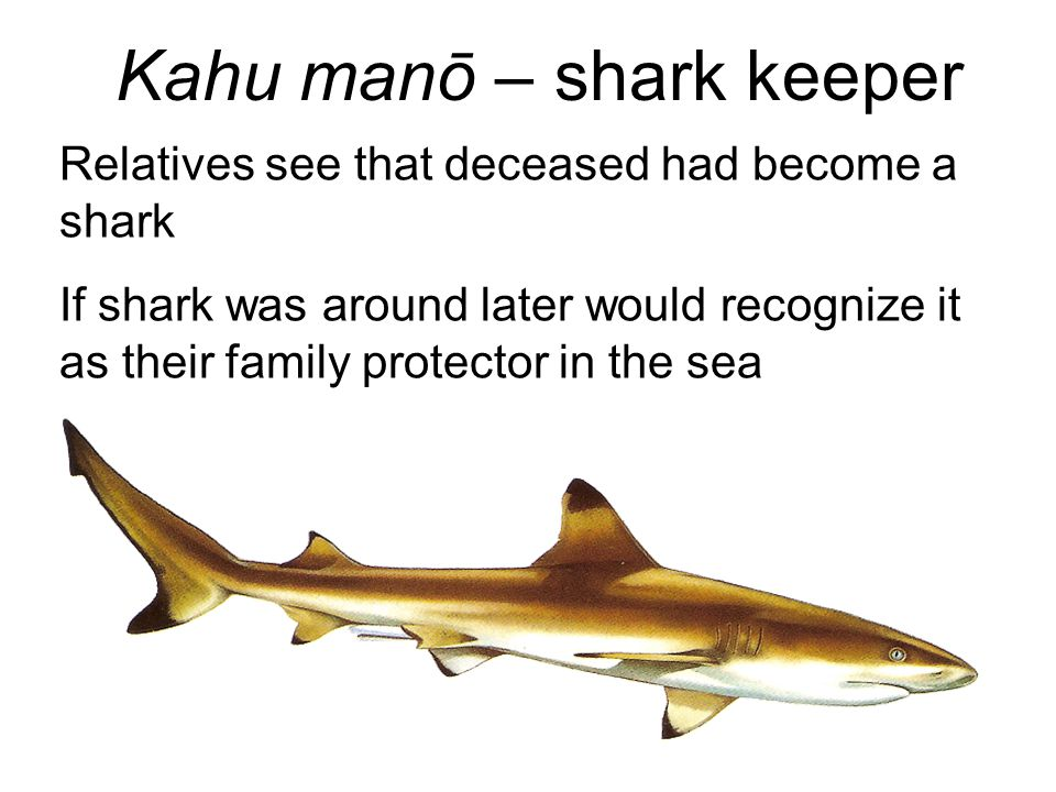 Kahu manō – shark keeper Relatives see that deceased had become a shark If shark was around later would recognize it as their family protector in the sea