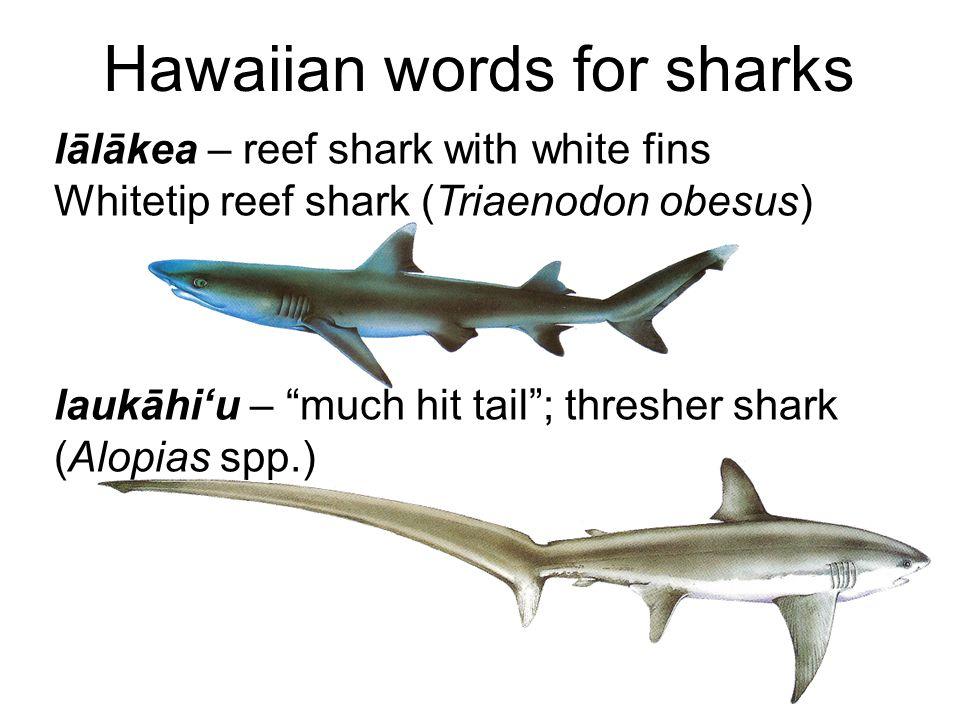 Hawaiian words for sharks lālākea – reef shark with white fins Whitetip reef shark (Triaenodon obesus) laukāhi'u – much hit tail ; thresher shark (Alopias spp.)