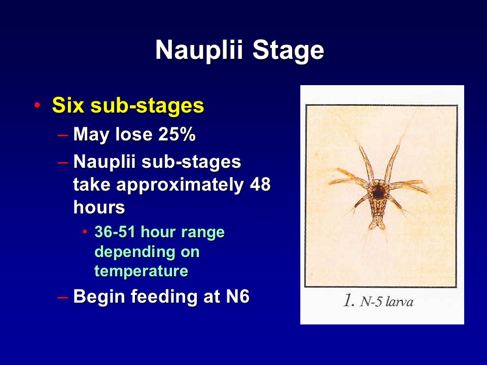 Nauplii Stage Six sub-stagesSix sub-stages –May lose 25% –Nauplii sub-stages take approximately 48 hours 36-51 hour range depending on temperature36-51 hour range depending on temperature –Begin feeding at N6