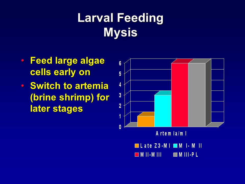 Larval Feeding Mysis Feed large algae cells early onFeed large algae cells early on Switch to artemia (brine shrimp) for later stagesSwitch to artemia (brine shrimp) for later stages