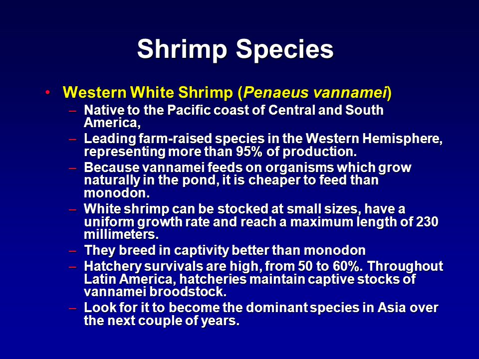 Shrimp Species Western White Shrimp (Penaeus vannamei)Western White Shrimp (Penaeus vannamei) –Native to the Pacific coast of Central and South America, –Leading farm-raised species in the Western Hemisphere, representing more than 95% of production.