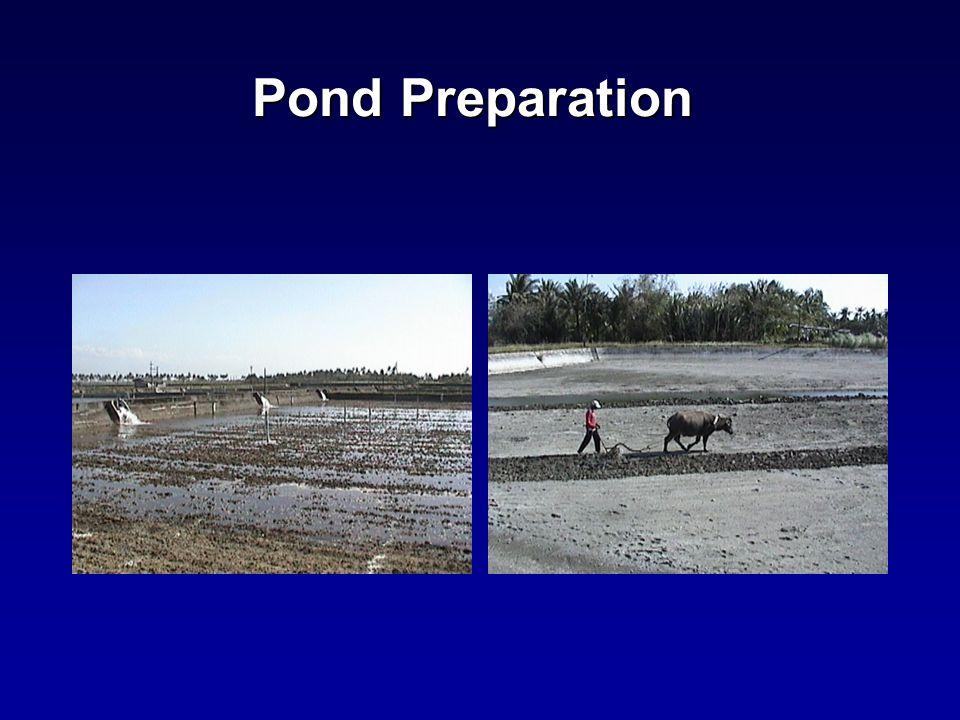 Pond Preparation